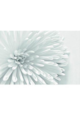 INOSIGN Картина »White цветок Heart&laqu...