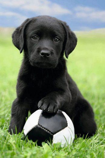Deco-Panel »Dog - labrador football«, 60/90 cm