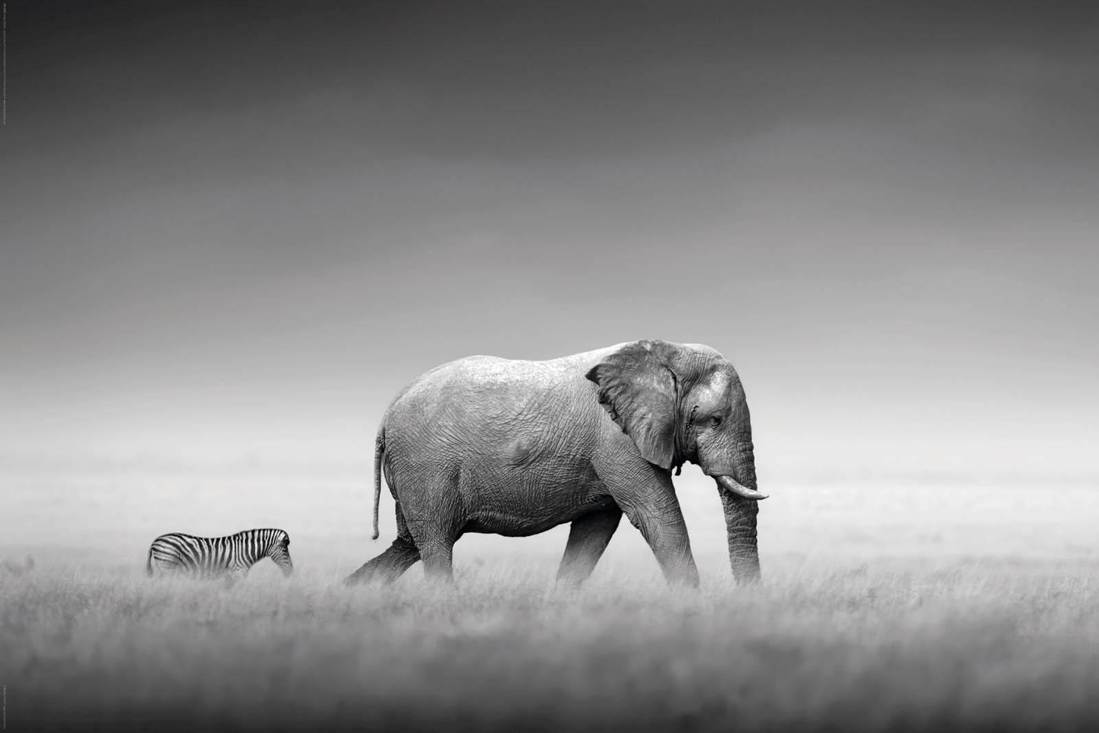 Home affaire, Deco Panel »Kings of Nature - elephant«, 90/60 cm
