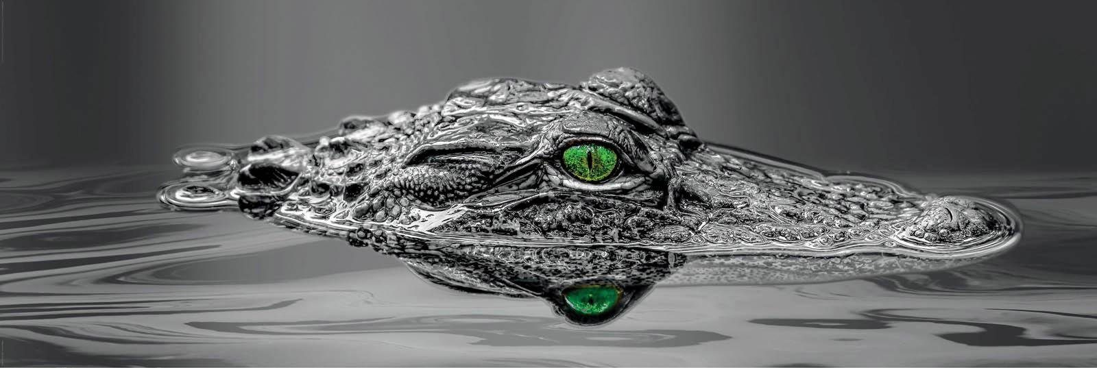INOSIGN Deco-Panel »Alligator Eyes«, Tiermotiv, 156/52 cm