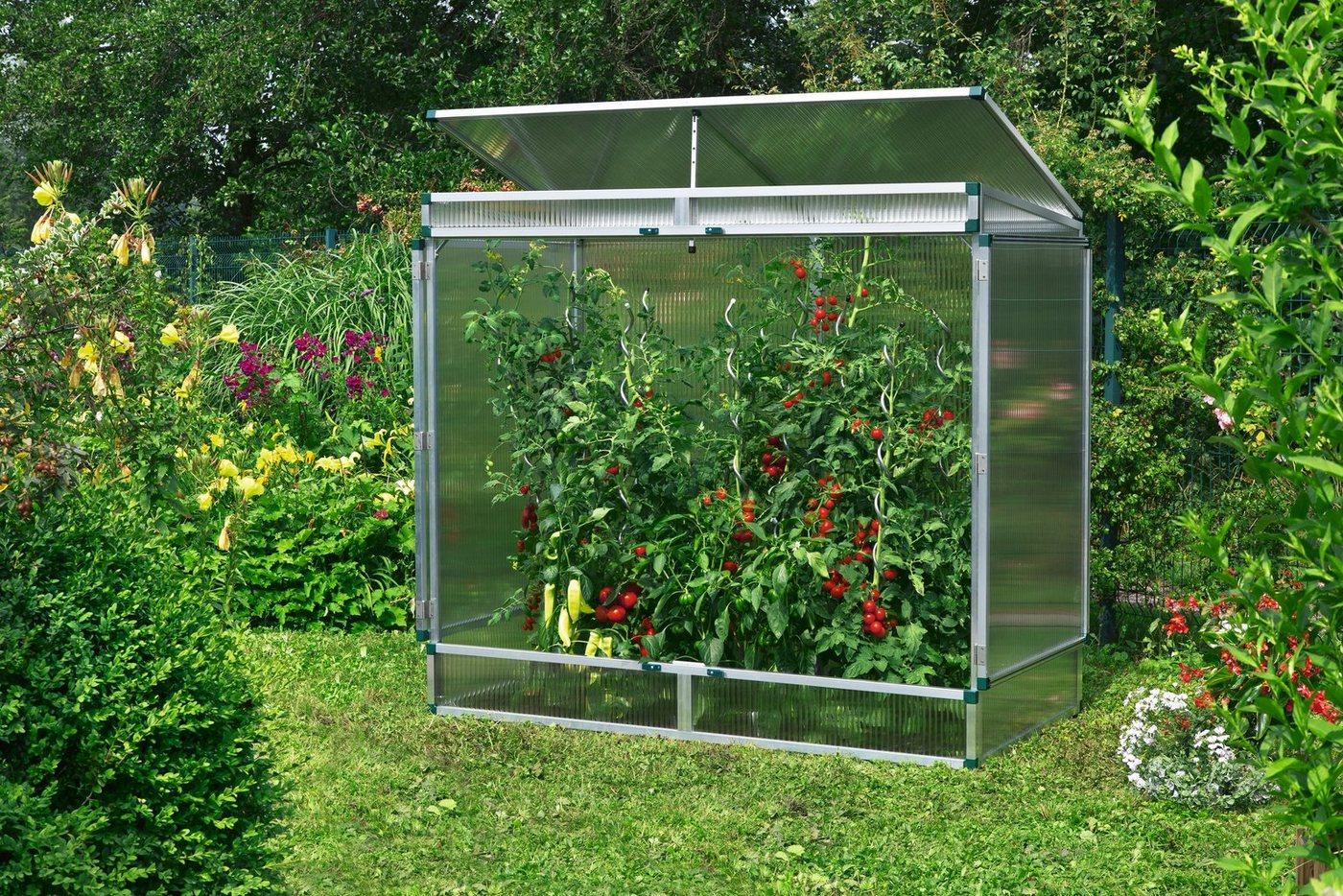 tomaten gew chsh user sonstige preisvergleiche erfahrungsberichte und kauf bei nextag. Black Bedroom Furniture Sets. Home Design Ideas