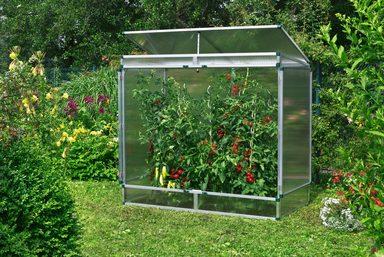 beckmann tomaten gew chshaus gr 2 b t h 201 107 183 cm online kaufen otto. Black Bedroom Furniture Sets. Home Design Ideas