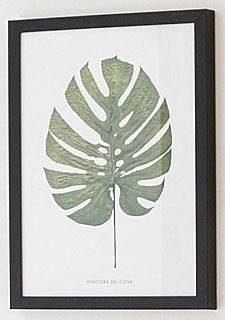 G&C Bild »Blatt Monstera Deliciosa«, 30/40 cm, gerahmt