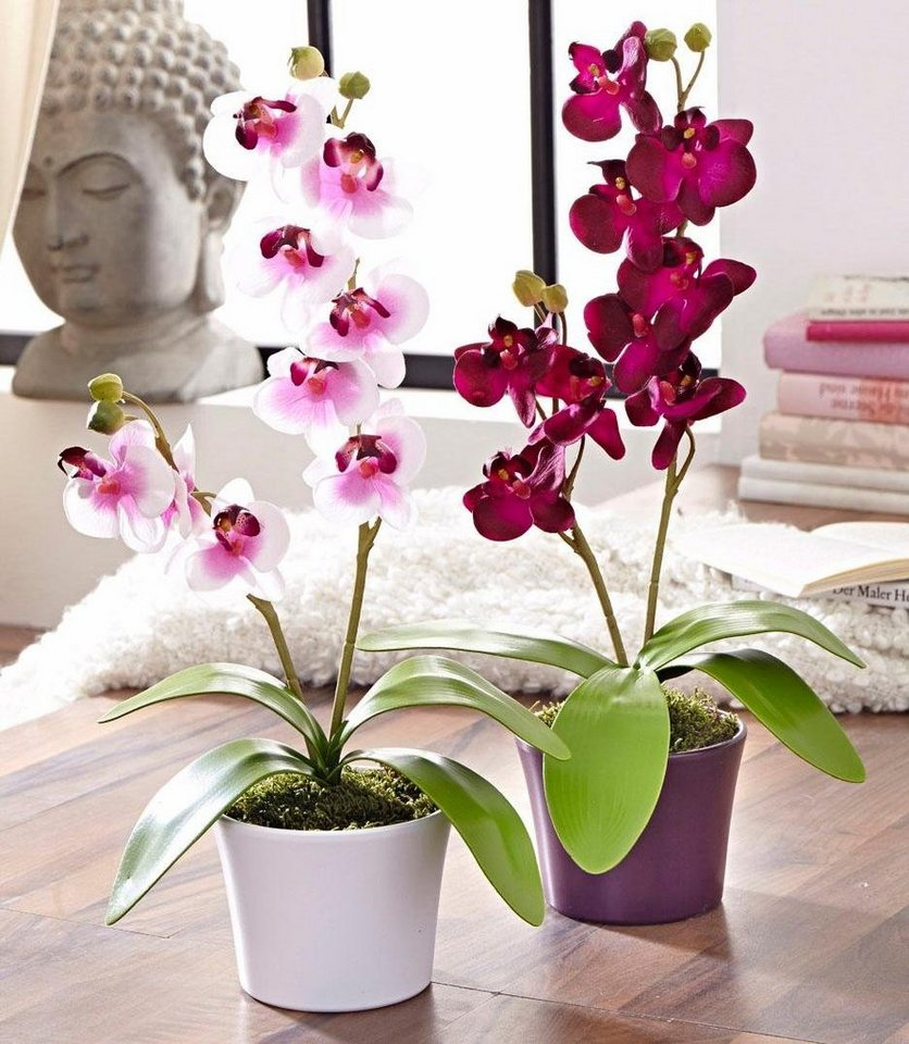 Home affaire Kunstblume »Orchidee« (2tlg.) in bunt
