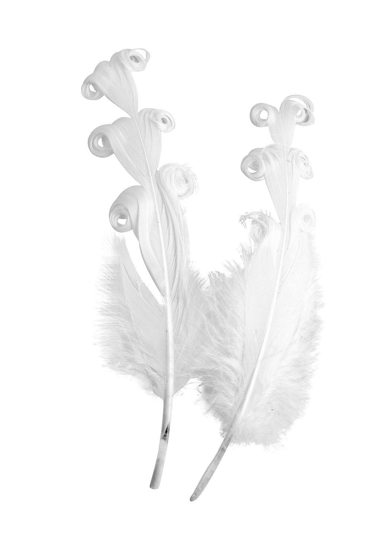 Gelockte Entenfedern weiß 12 Stück