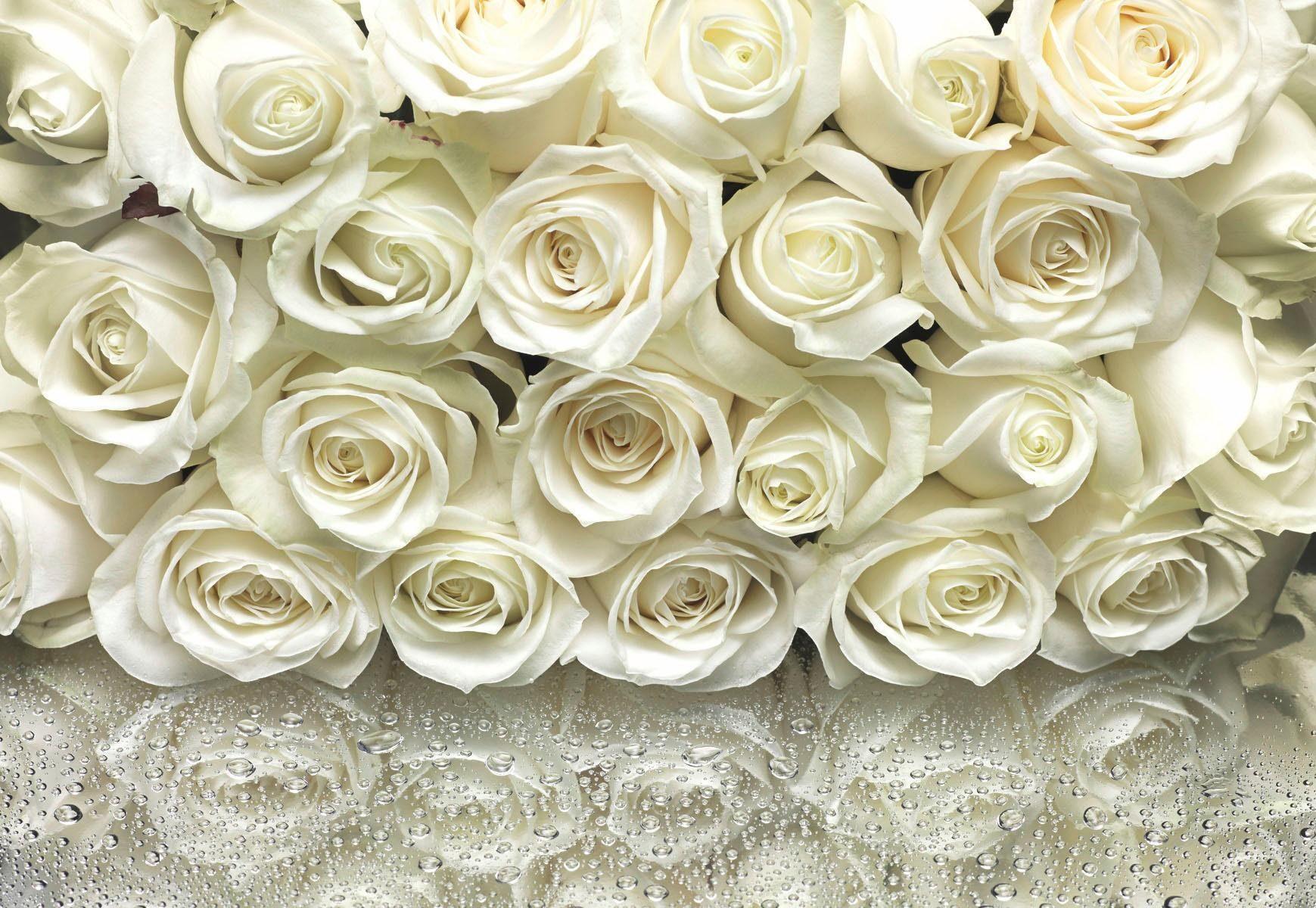 Home affaire Fototapete »A La Rose«, 368/254 cm