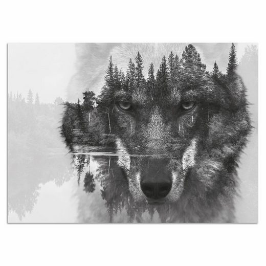 Home affaire Acrylglasbild »Wolf«, 60/40 cm