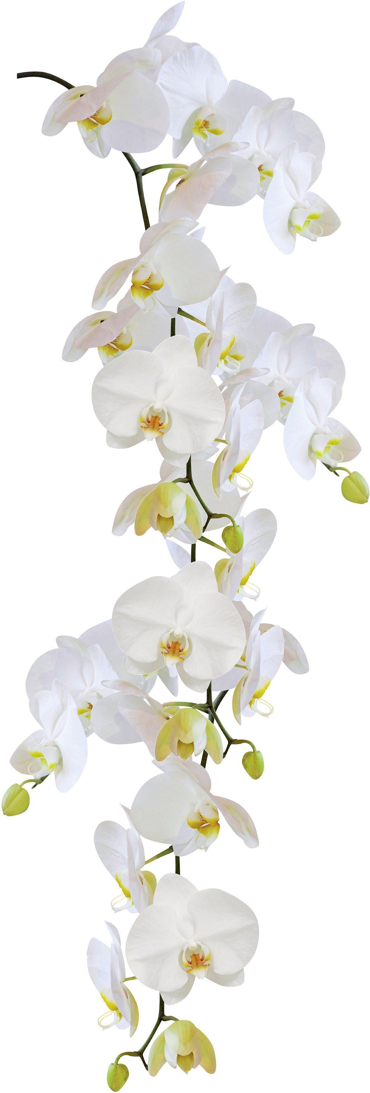 KLEINE WOLKE Wandfolie »Statics Orchid«