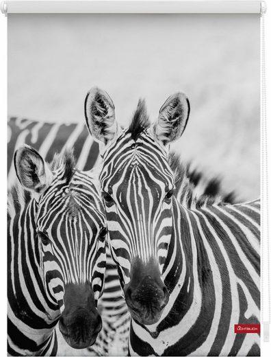 Seitenzugrollo »Klemmfix Motiv Zebra«, LICHTBLICK, Lichtschutz, ohne Bohren, freihängend, bedruckt
