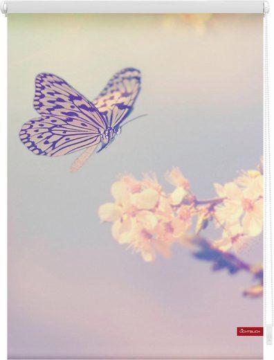 Seitenzugrollo »Klemmfix Motiv Schmetterling«, LICHTBLICK, Lichtschutz, ohne Bohren, freihängend, bedruckt
