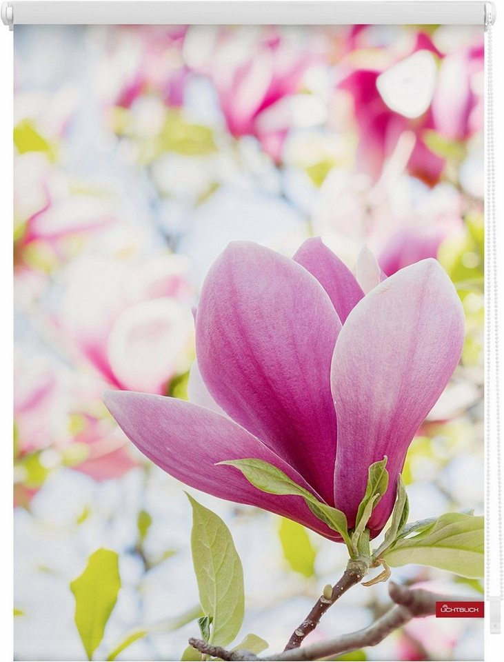 seitenzugrollo magnolie lichtblick lichtschutz klemmfix klemmfix kettenzug lichtschutz. Black Bedroom Furniture Sets. Home Design Ideas