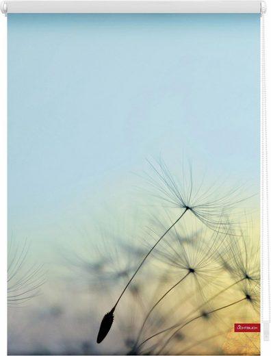 Seitenzugrollo »Klemmfix Motiv Pusteblume«, LICHTBLICK, Lichtschutz, ohne Bohren, freihängend, bedruckt