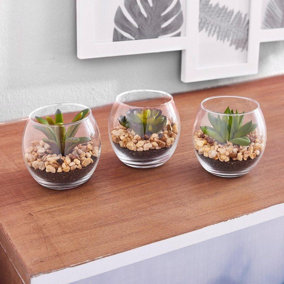 home affaire kunstpflanze sukkulenten 3 tlg naturgetreue kunstblume online kaufen otto. Black Bedroom Furniture Sets. Home Design Ideas