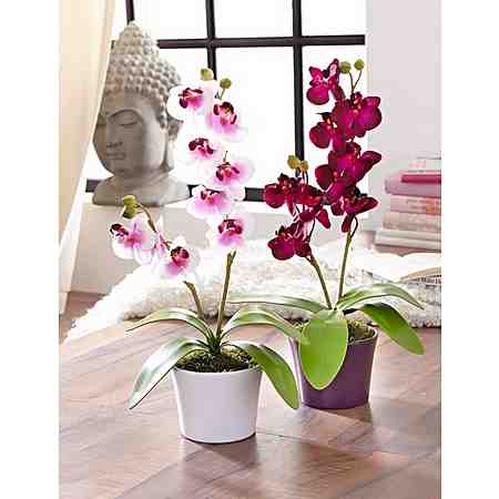 Home affaire Kunstblume »Orchidee« (2tlg.)