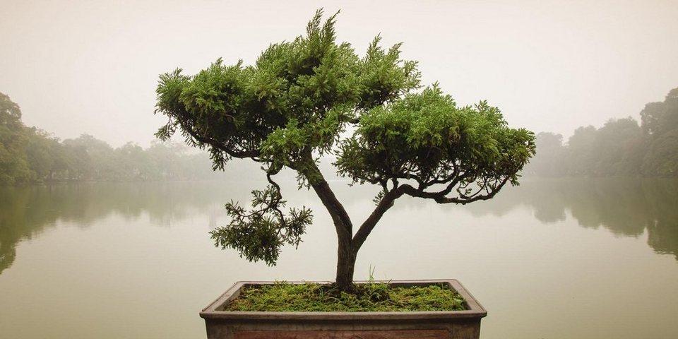 home affaire glasbild panom chinesischer bonsaibaum. Black Bedroom Furniture Sets. Home Design Ideas
