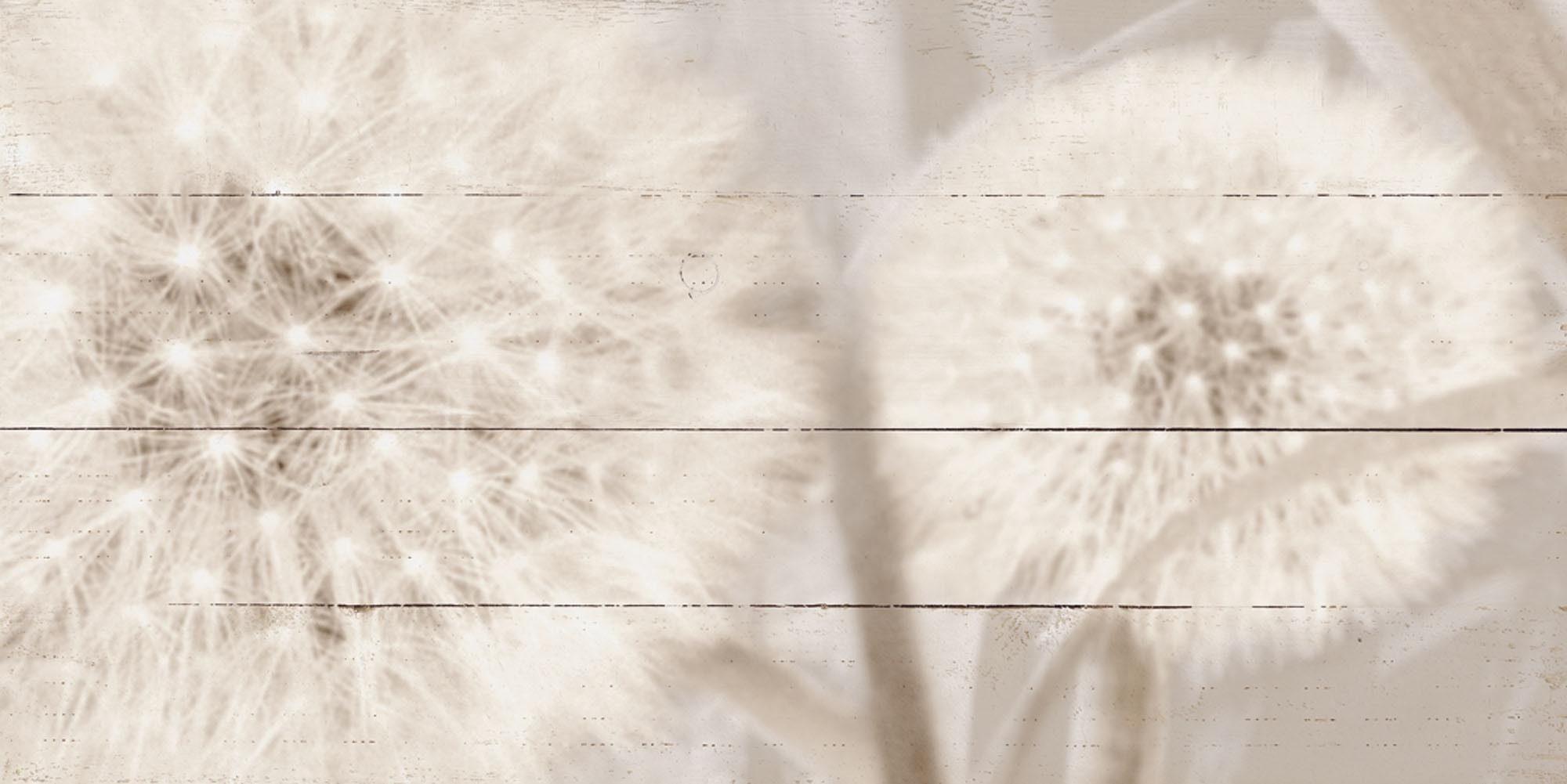 Home affaire, Holzbild, »Riweda: Pusteblume in Sepia«, 100/50 cm