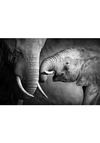 Paveikslas ant drobės »Elefant«