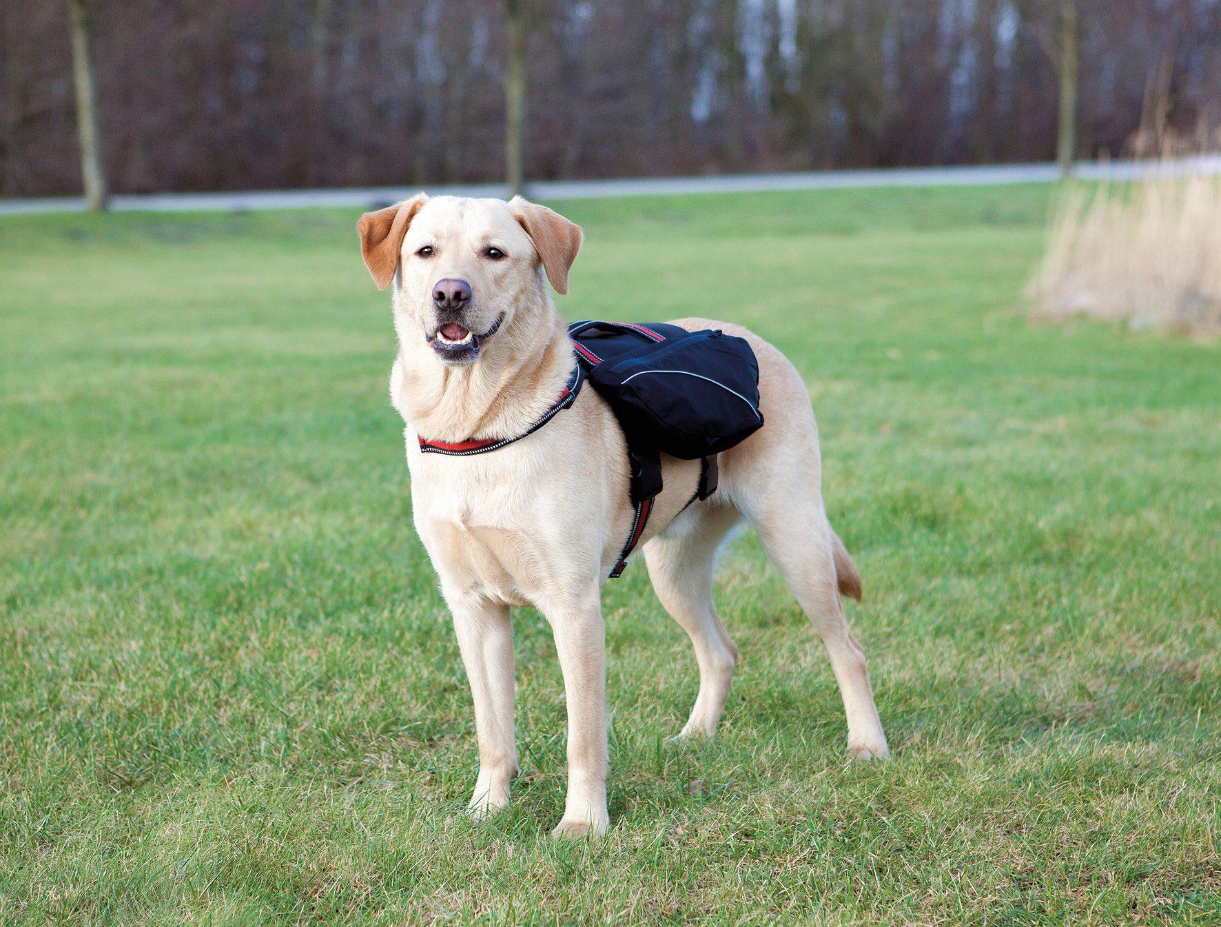 TRIXIE Hunde-Tragetasche »Rucksack L«, B/T/H: 29/8/15 cm
