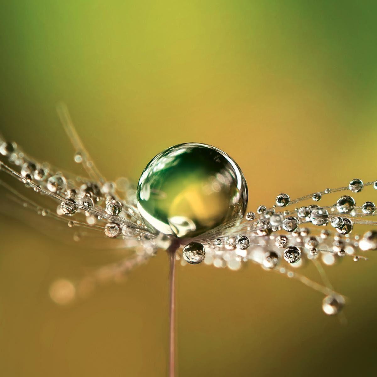EUROGRAPHICS Glasbild »Beautiful Dew Drops«, 20/20 cm