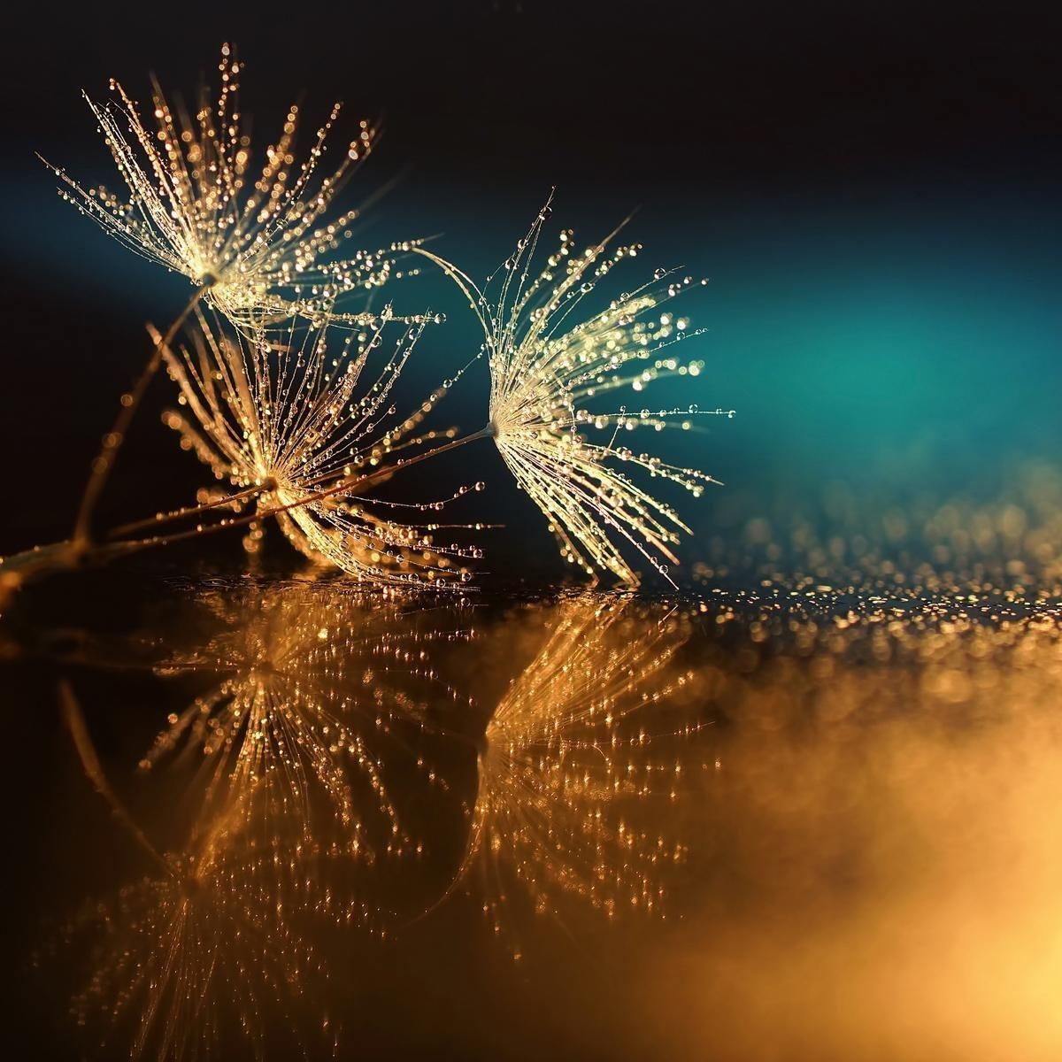 EUROGRAPHICS Glasbild »Dandelion Seeds«, 50/50 cm | Dekoration > Bilder und Rahmen > Bilder | Glas | EUROGRAPHICS