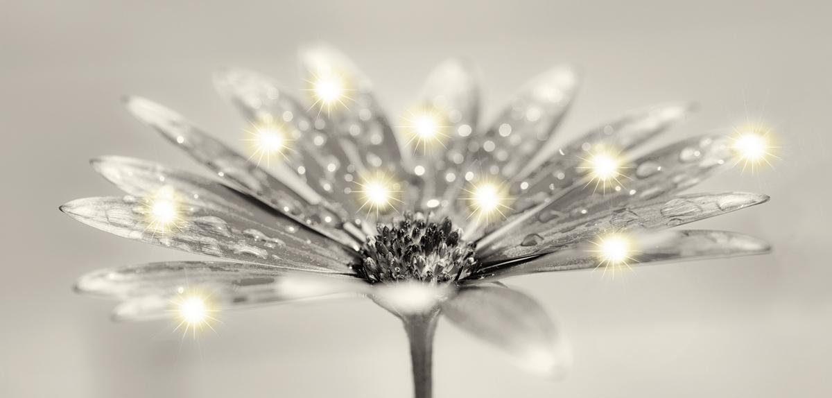 EUROGRAPHICS LED-Bild »Jewel Bloom«, 115/55 cm