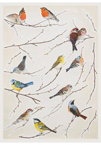 KOMAR Sienos lipdukai »Vögel«