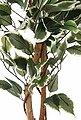 Kunstpflanze »Ficus Benjamini« Ficus Benjamini, Creativ green, Höhe 150 cm, Bild 3