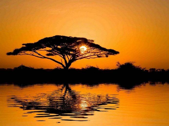 HTI-Living Glasbild »Schirmakazie«