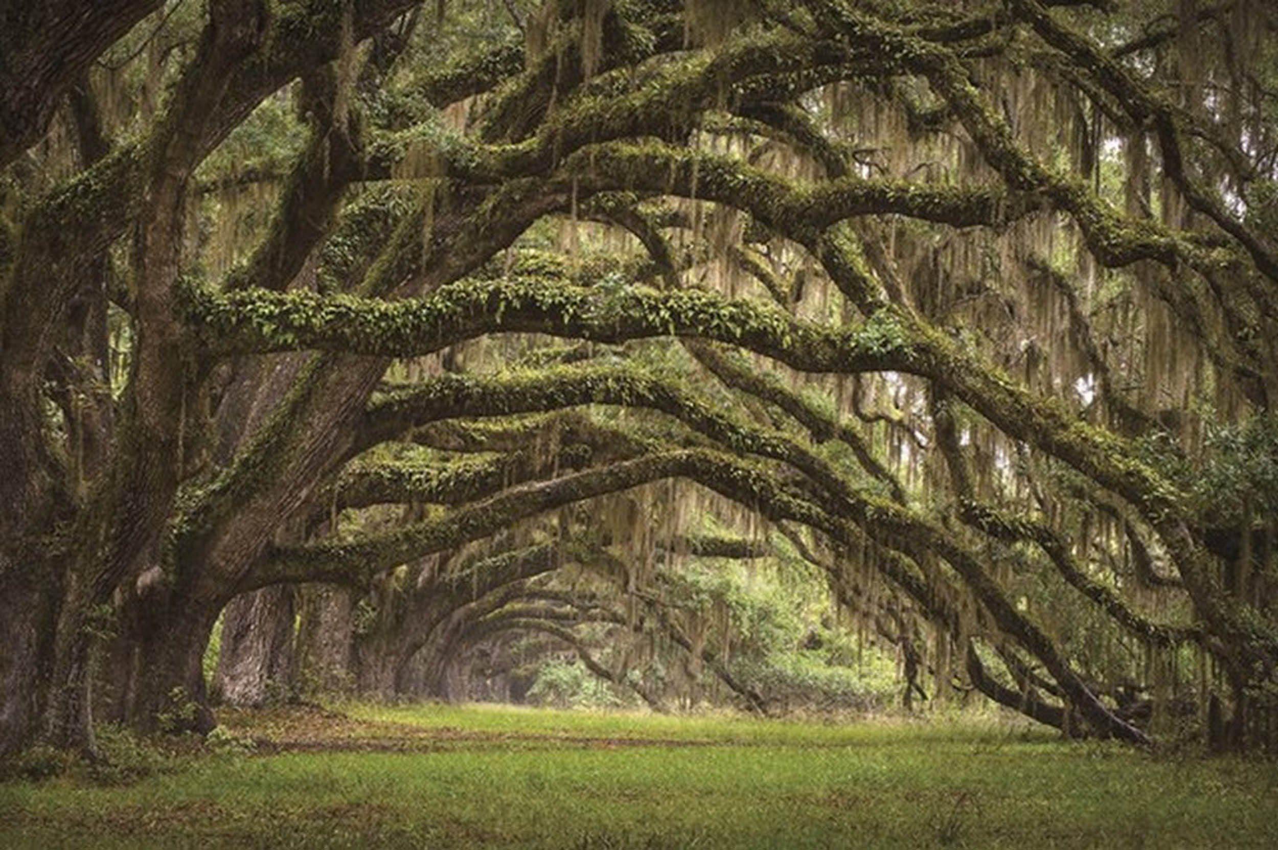 HTI-Living Glasbild »Baum«