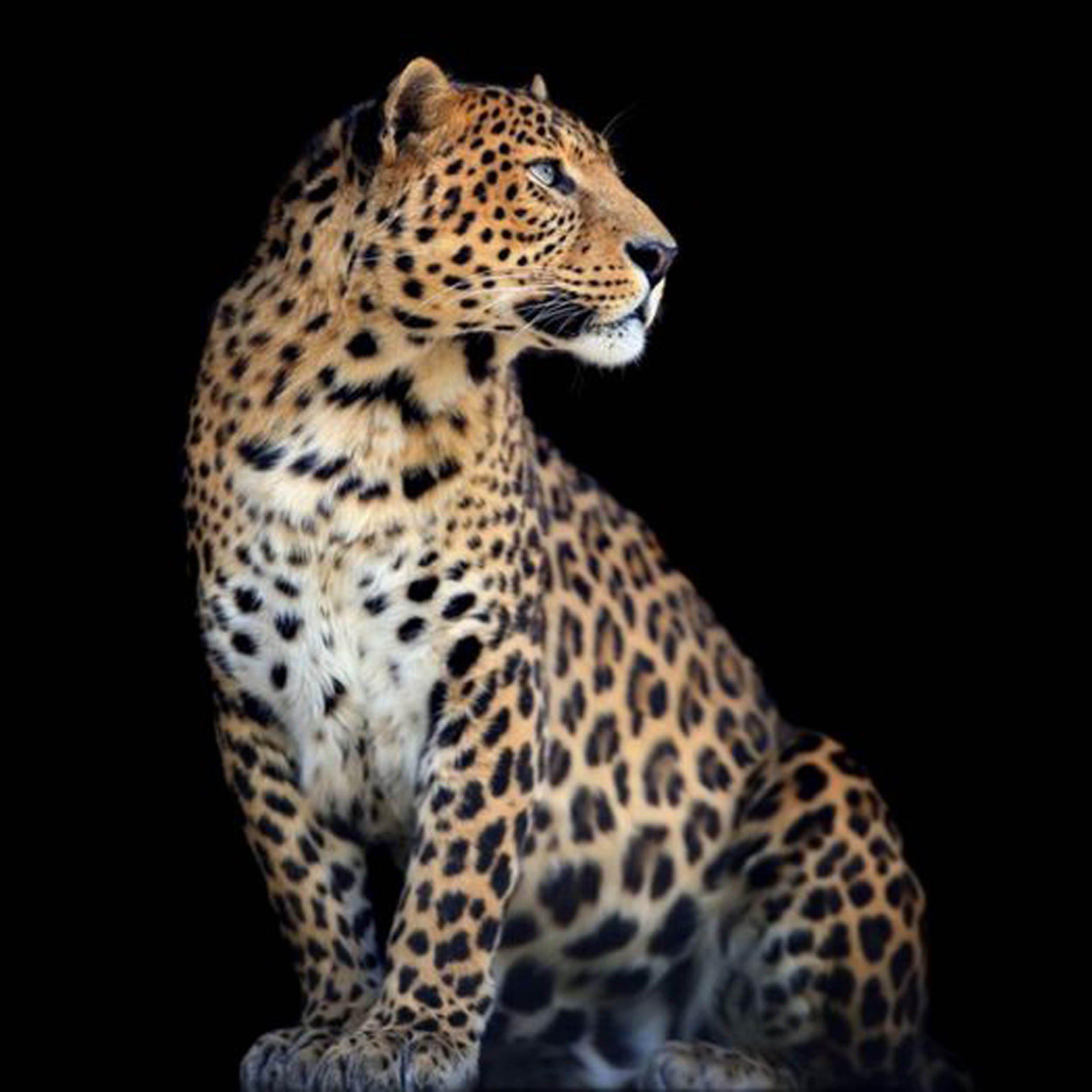 HTI-Living Bild »Leopard«
