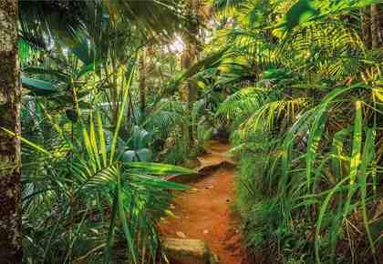 Komar, Fototapete, »Jungle Trail«, 368/254 cm