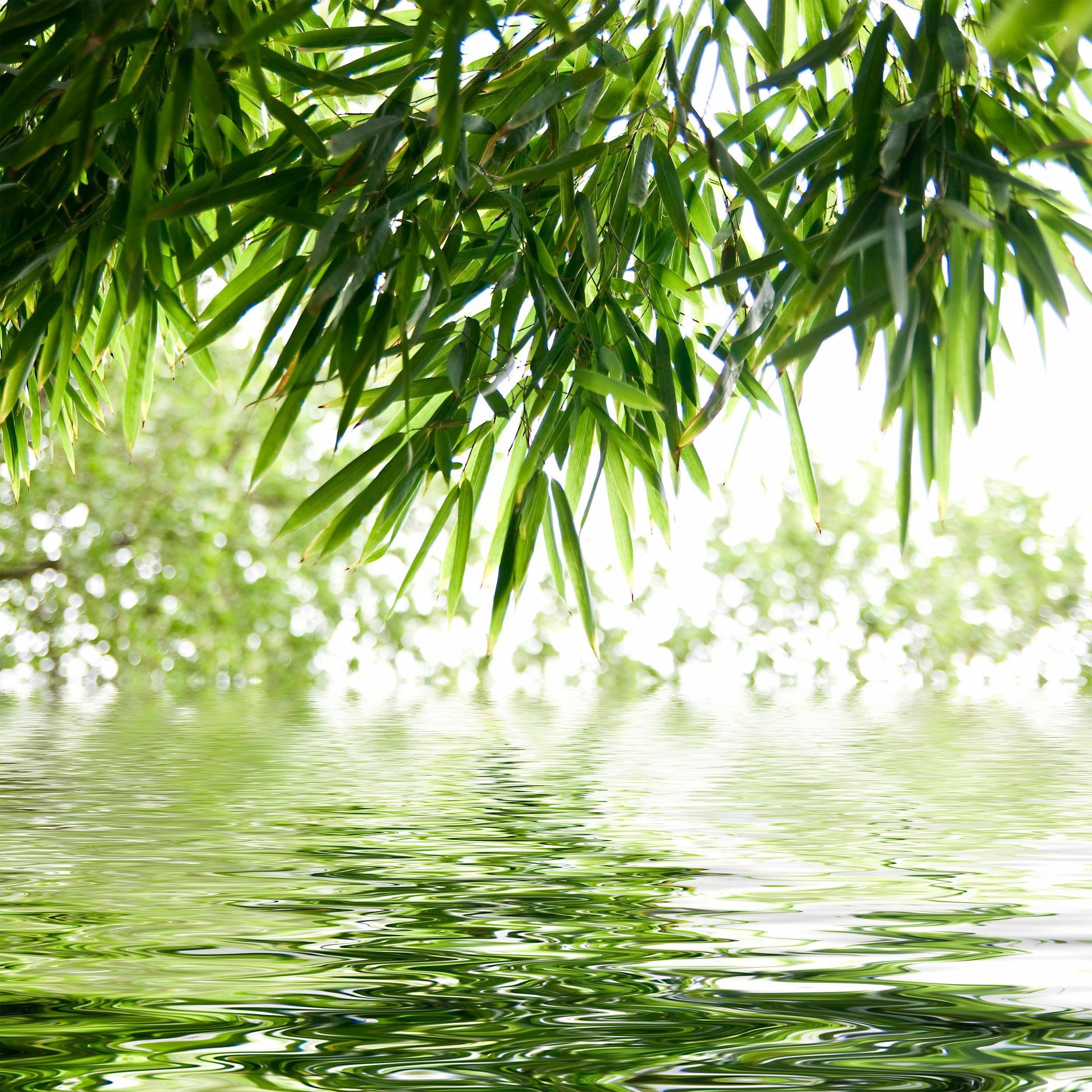Glasbild, »Tropic«, 30/30cm