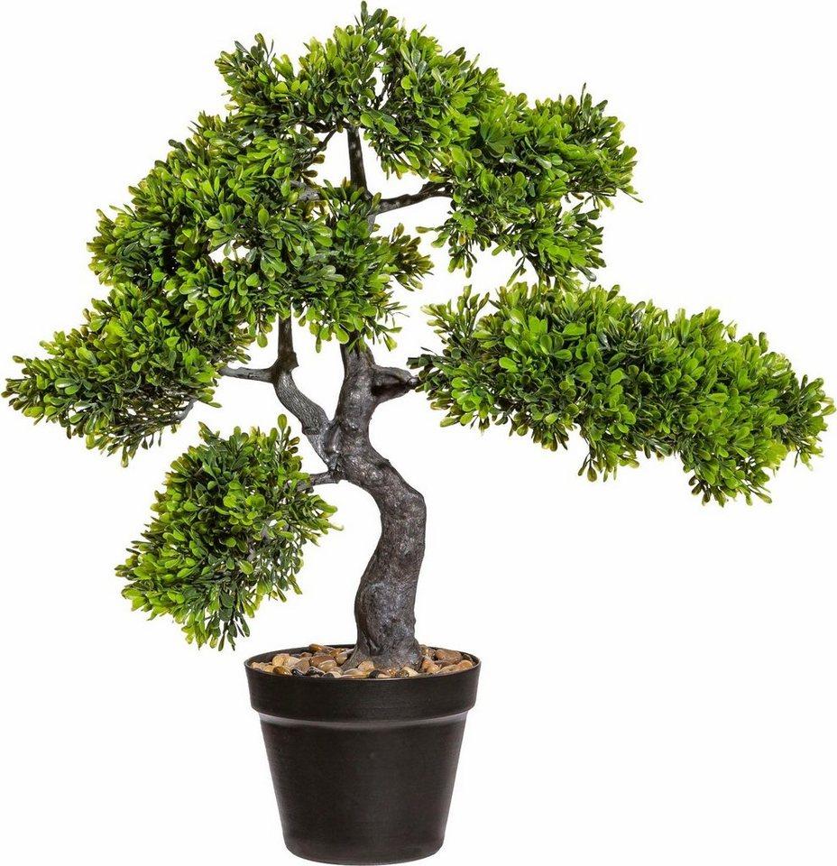 deko bonsai teeblatt im topf pflegeleicht und das ganze. Black Bedroom Furniture Sets. Home Design Ideas