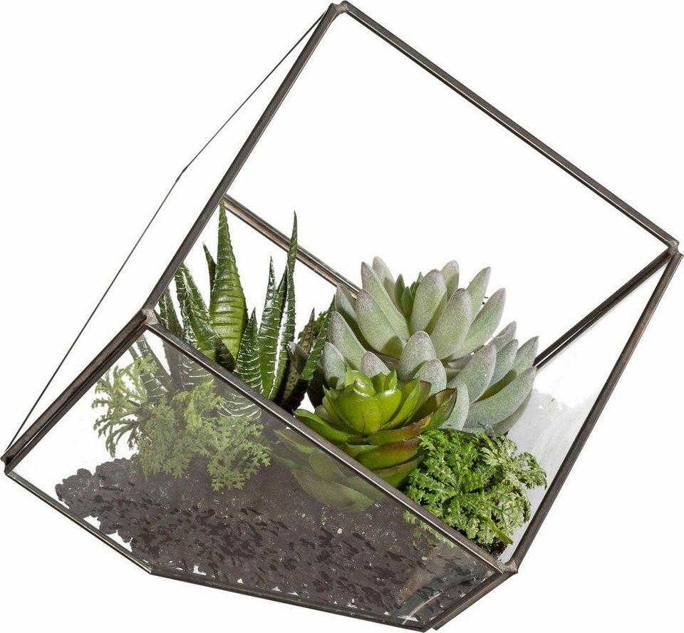 deko pflanze im glaskubus online kaufen otto. Black Bedroom Furniture Sets. Home Design Ideas