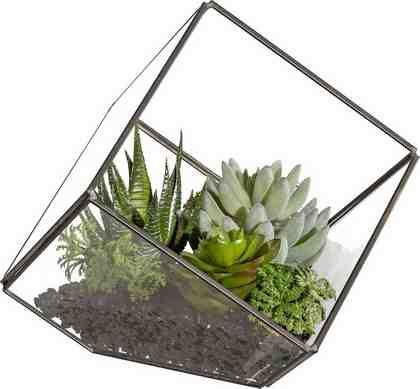 Deko Pflanze im Glaskubus