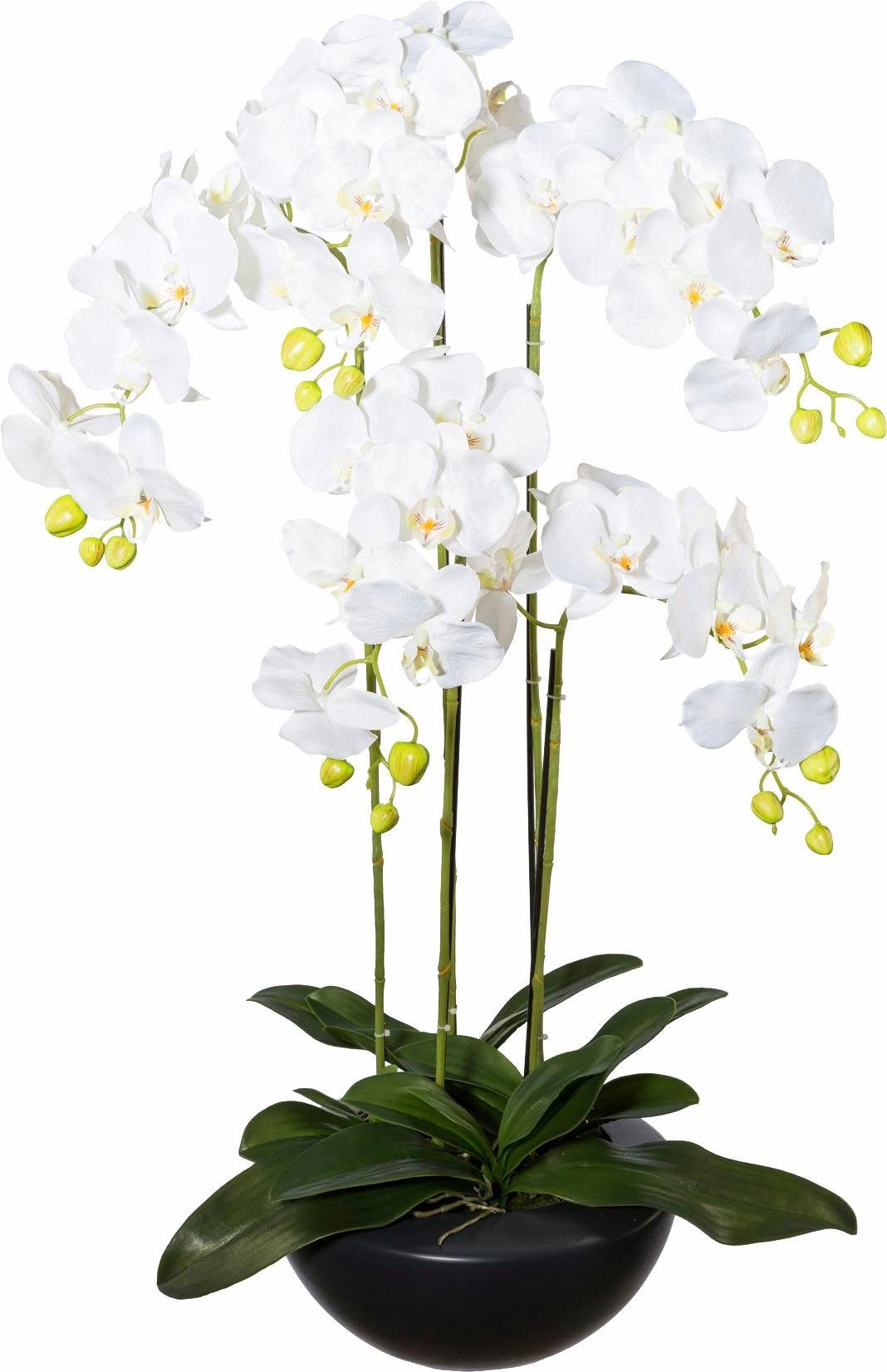 Deko Orchidee im Keramikschale
