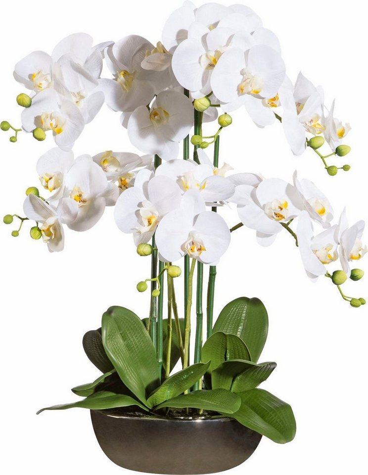 Deko orchidee in keramikschale ca 60 cm hoch otto - Orchideen deko ...