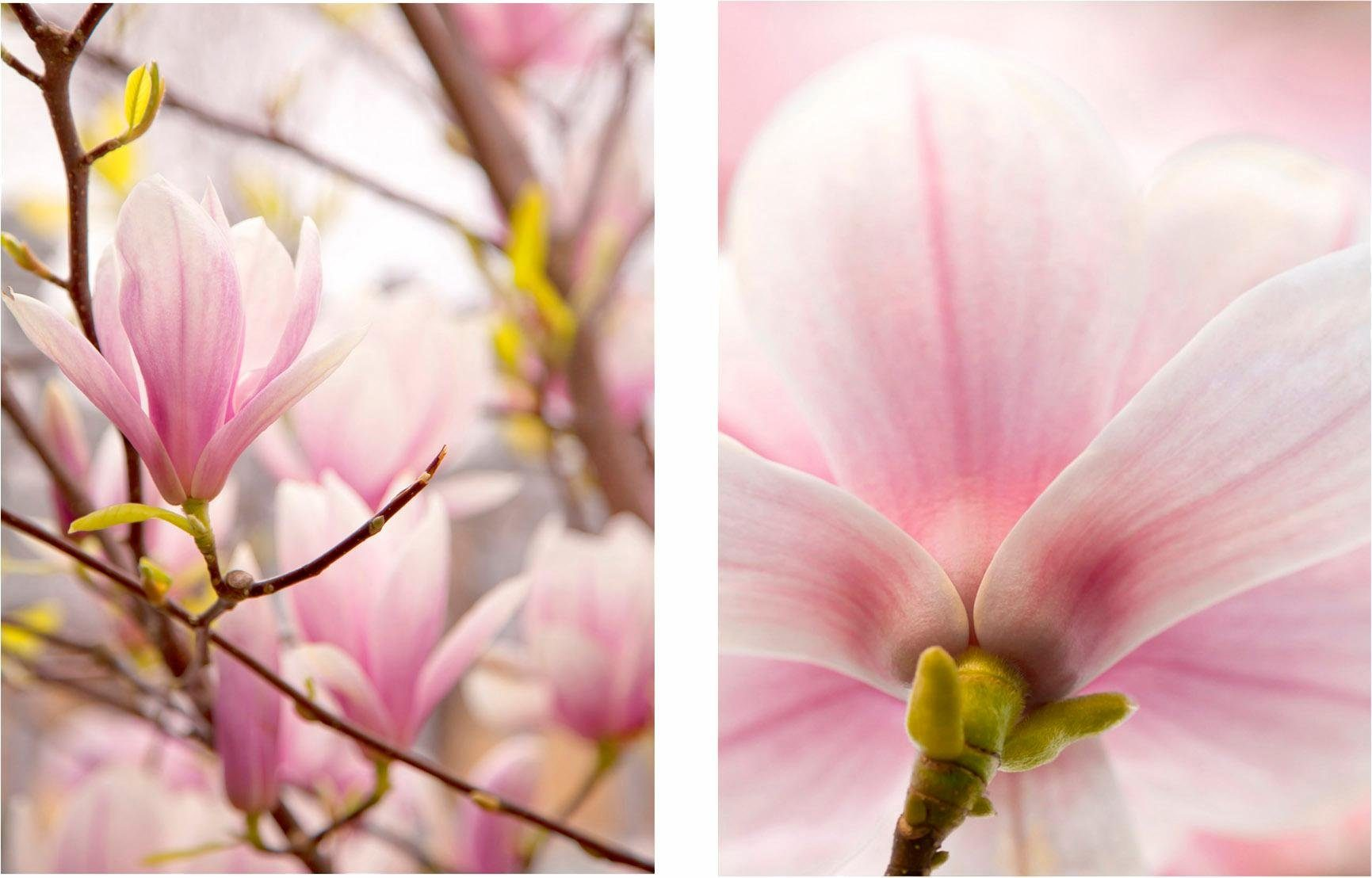 Home affaire Bild »Magnolien«, (Set), 2er Set