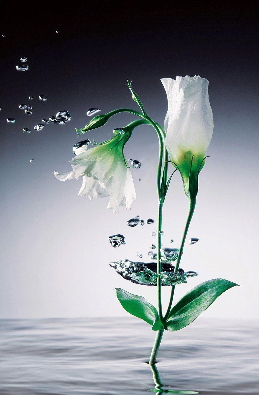 IDEALDECOR XXL Poster »Giant Art - Crystal Flowers«