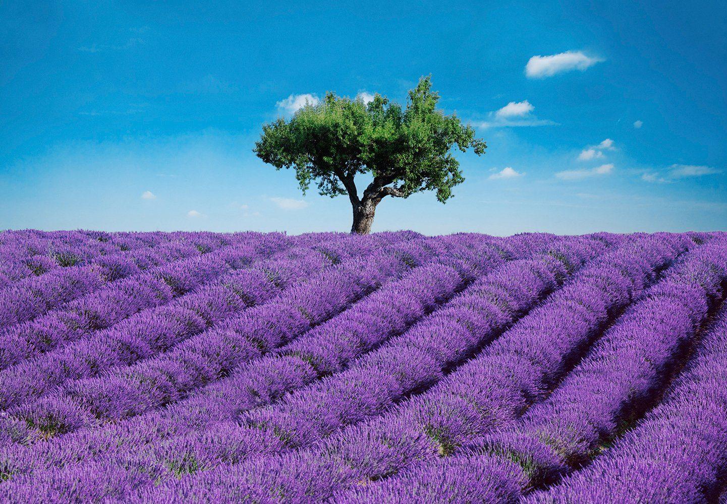 Fototapete »Provence«, 8-teilig, 366x254 cm