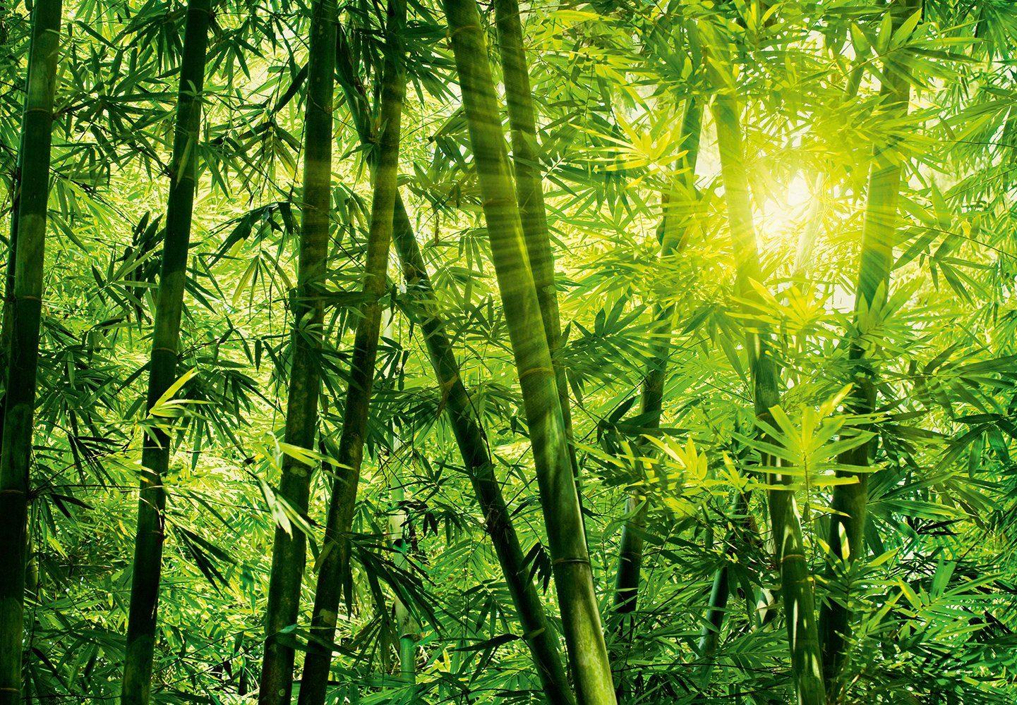 Fototapete »Bamboo Forest«, 8-teilig, 366x254 cm