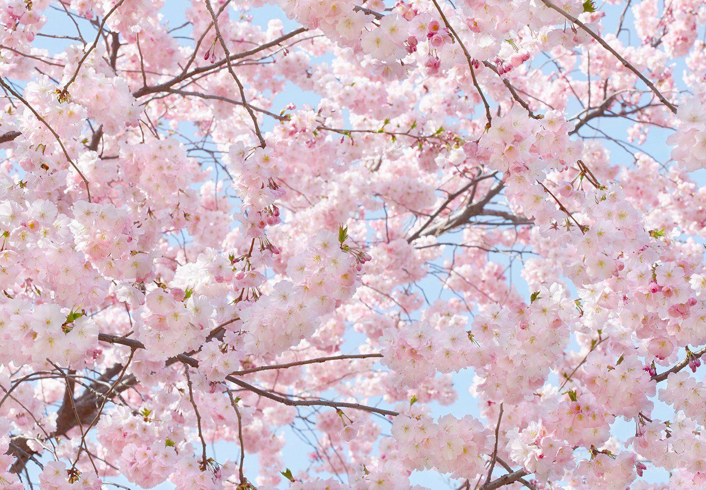 Fototapete »Pink Blossoms«, 8-teilig, 366x254 cm