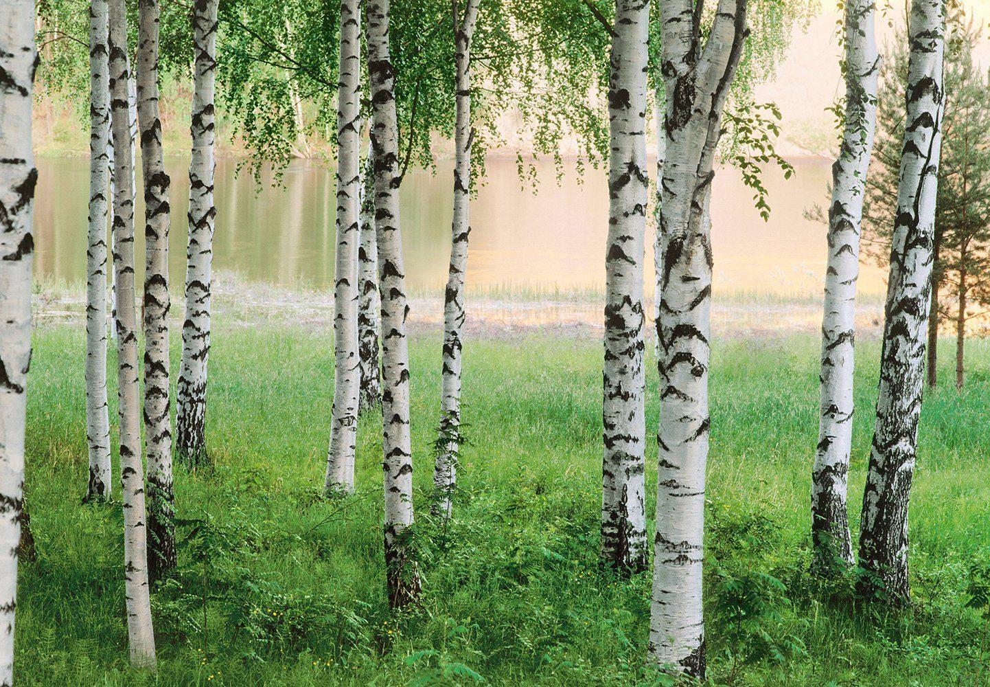 Fototapete »Nordic Forest«, 8-teilig, 366x254 cm