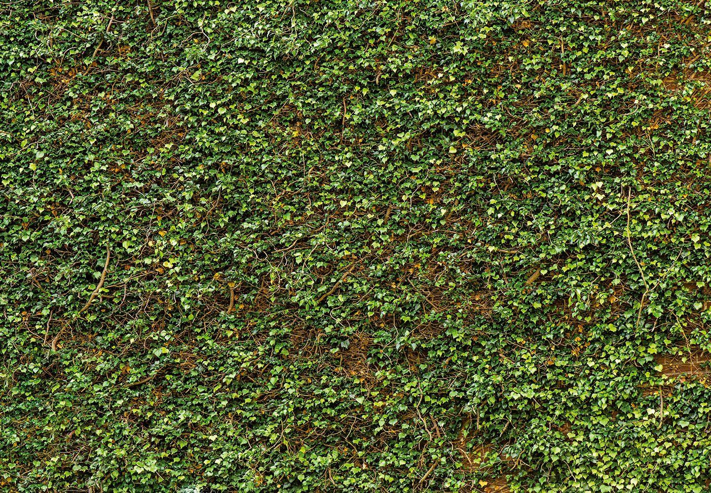 Vliestapete »Ivy Wall«, 366x254cm, 8-teilig