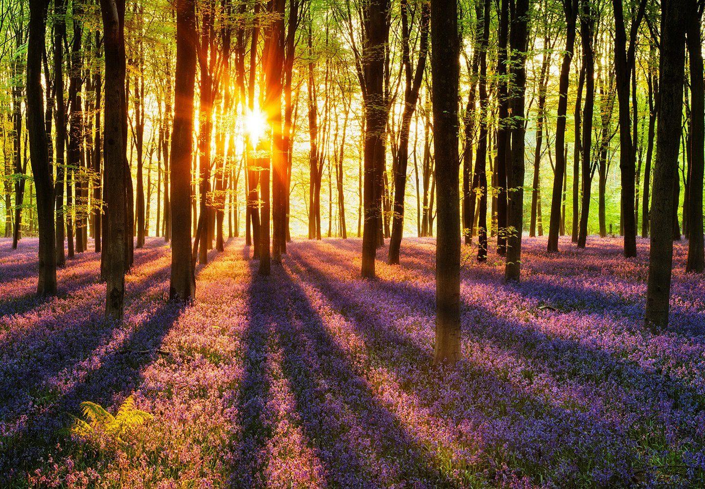 Vliestapete »Woodland at Dawn«, 366x254cm, 8-teilig