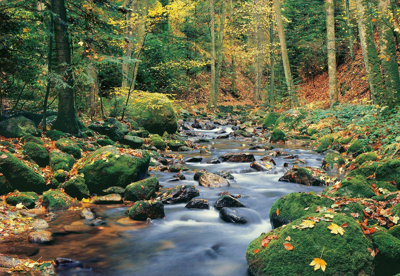 Fototapete »Forest Stream«, 8-teilig, 366x254 cm