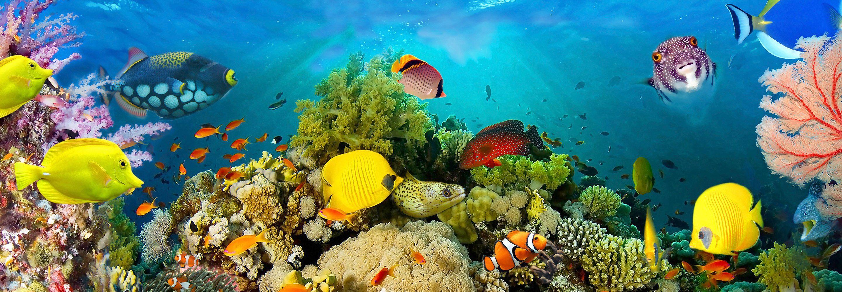 Vliestapete »Sea Corals«, 366x127cm, 4-teilig