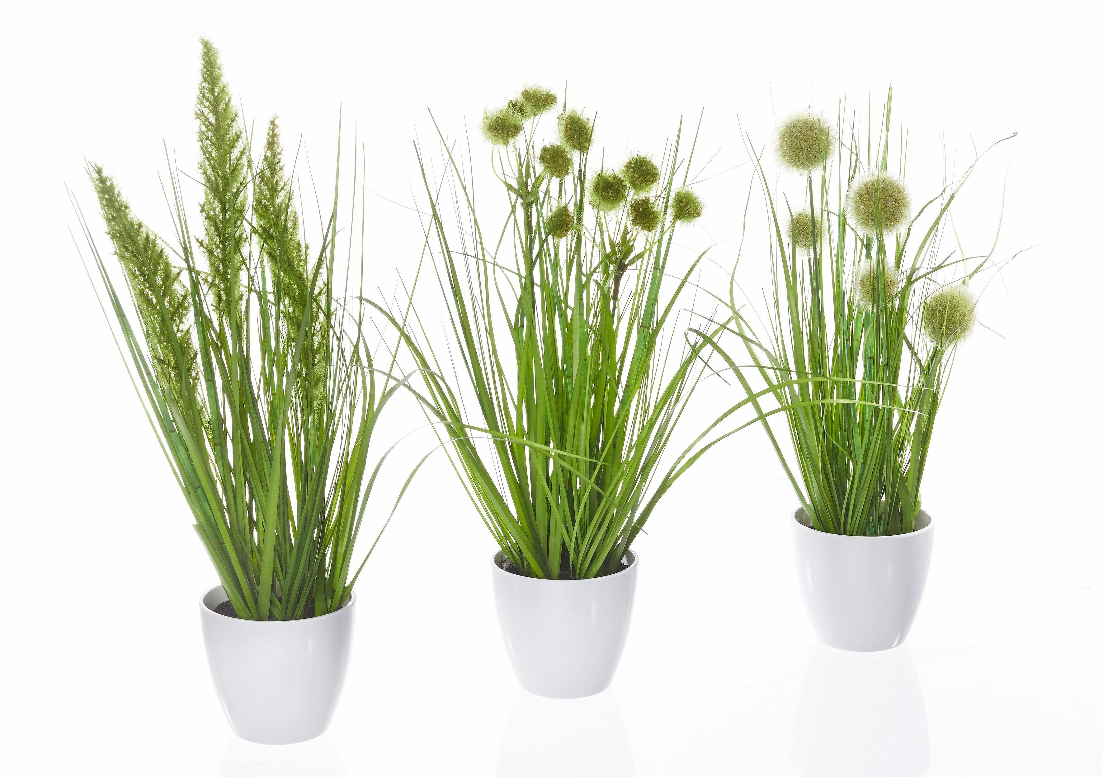 Home affaire Kunstpflanze »Gras im Topf« (3er Set)