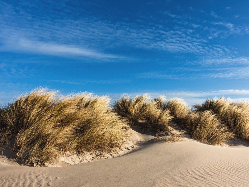 Artland Poster, Leinwandbild »Düne Küste Ostsee Landschaften Strand ...