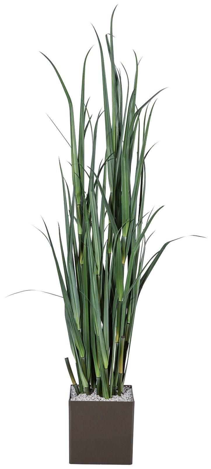 Kunstpflanze »Miscanthusgras«, im Kunststofftopf, H: 120 cm